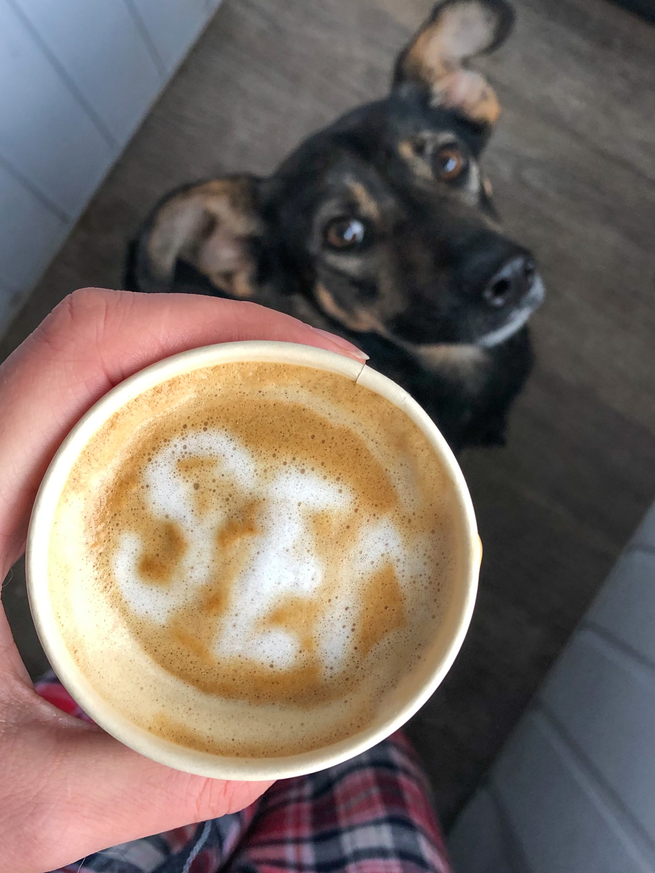 Dog is watching my SEO cappuccino attempts closely